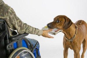 foto: hund leverer avis til person i rullestol
